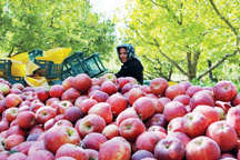 افزایش ۱۶۶ درصدی صادرات آذربایجان غربی  نسبت به سال گذشته