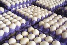 تخم مرغ های بدون مشخصات در قزوین جمع آوری می شوند