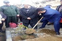 کاشت 764 نهال به یاد شهدای شهرستان مهاباد  غرس نهال شهدا در خبرگزاری جمهوری اسلامی