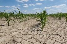 خشکسالی وکم آبی مهمترین مشکل کشاورزی سمنان است