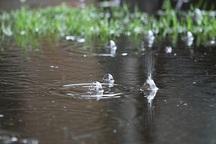 بارش ها در شهرضا 2.6 برابر شد