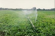 پنج طرح کشاورزی در داورزن به ثمر نشست