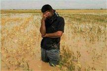 حدود چهار هزار کشاورز نکایی متقاضی دریافت خسارت سیلاب هستند