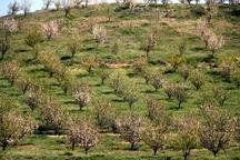 تحقق اقتصاد مقاومتی زیر سایە توسعه باغات میوه