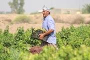 140 میلیارد ریال خسارت کشاورزان خراسان شمالی پرداخت شد