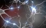 معیار جدیدی برای باهوش بودن بعضی مغزها