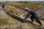 دستگاه های دولتی برای پاکسازی اراضی کشاورزی وارد عمل شوند