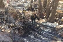 رئیس منابع طبیعی و آبخیز داری استهبان:منطقه باغ جوزا و سرآسیاب،قرقبان می خواهد