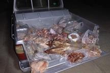 200 کیلوگرم گوشت فاسد در بیجار کشف و ضبط شد