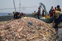 یکهزار و 800 تن میگو از آبهای هرمزگان صید شد