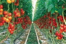 گلخانه های آذربایجان غربی 250 میلیارد ریال اعتبار نیاز دارد