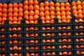 آغاز توزیع میوههای تنظیم بازار عید از امروز  اعلام قیمت میوه شب عید در آذربایجان شرقی