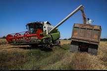 خرید تضمینی گندم در خوزستان از نیم میلیون تن گذشت