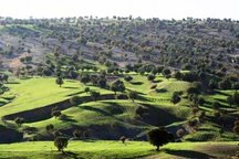 2000 هکتار به تعاونی های جنگلداری کردستان واگذار می شود