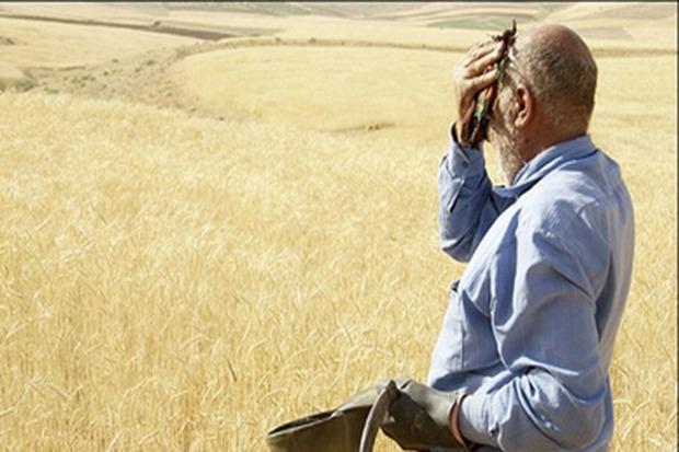 خرید تضمینی گندم در زنجان تا هشت روز دیگر ادامه دارد