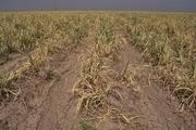 ۹۲۶ میلیارد تومان برای جبران خسارت سیل به کشاورزی خوزستان اختصاص یافت