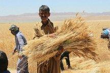 بین 60 تا 65 میلیون تن از تولیدات محصولات کشاورزی، زراعی است