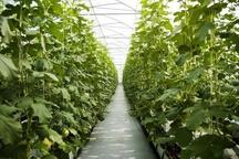 بیکاری 7 هزار مهندس کشاورزی در آذربایجان غربی  اولویت جهادکشاورزی ایجاد زمینه اشتغال است