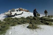 مقداری علوفه در منطقه حفاظت شده باشگل توزیع شد