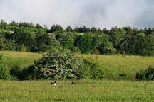 مبارزه با آفات و بیماریهای جنگلی در سطح ۷۵ هکتار از اراضی پاسارگاد