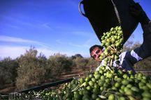 ۳۵۶ میلیارد ریال تسهیلات اشتغال روستایی در سبزوار پرداخت شد