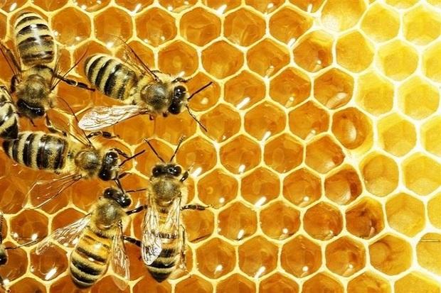امسال 320 تُن عسل در نقده تولید شد