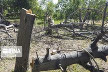 عامل قطع درختان جاده بیستون به کرمانشاه دستگیر شد