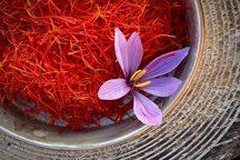 خرید تضمینی پنج  تن زعفران در تایباد