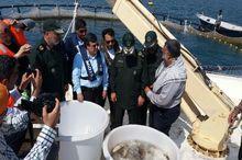 برداشت اولین محصول از سامانه پرورش ماهی در قفس در جزیره قشم