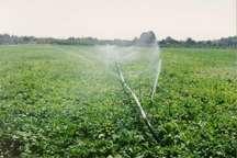 افزایش 50 درصدی بهره وری آب با استفاده از آبیاری قطره ای در اشکذر