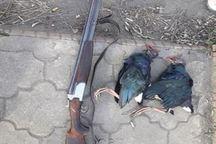 علیه شکارچی متخلف در پارک ملی بوجاق، اعلام جرم شد