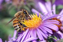 پرورش حشرات مفید برای کنترل آفات در مزارع کردستان