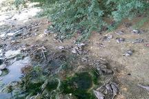 شمار زیادی پرنده به علت نامعلوم در زرآباد کنارک تلف شدند