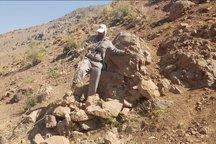 بیش از 10 کومه شکار غیر مجاز در ارتفاعات شکار ممنوع گرین تخریب شد