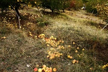 پرداخت  810 میلیارد ریال تسهیلات به 9200 نفر از خسارت دیدگان ناشی از سیل در آذربایجان شرقی