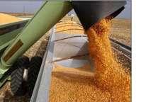 خرید تضمینی 624 هزار تن محصول کشاورزی در آذربایجانغربی