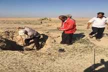طرح جنگلکاری در روستای چهارروستایی گناوه اجرا شد