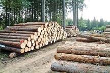 تشدید بازرسی ها برای جلوگیری از خروج هرگونه اشجار جنگلی از اهر