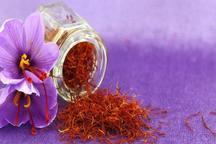زعفران بدون پروانه بهداشتی تقلبی است