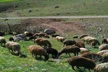 عشایر منطقه کلری ایرانشهر از آب آشامیدنی سالم بهره مند شدند