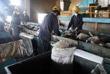 مرگ دلخراش 4 کارگر درون دستگاه خمیر کاغذ در مشهد