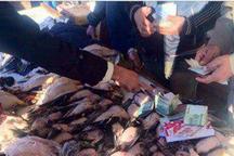 محیط زیست مازندران بساط بازار فروش پرندگان را در فریدونکنار جمع کرد
