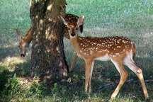 سیاست محیط زیست دخالت حداقلی در نگهداری حیات وحش است