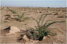 اجرای طرح های بیابان زدایی در 11 هزار هکتار از اراضی  قزوین