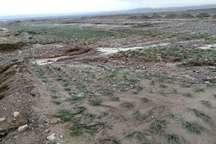 سیل 654 میلیارد ریال زیان به بخش کشاورزی شهرستان قاینات وارد کرد