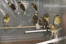 450 قطعه پرنده از متخلفان زیست محیطی کشف شد