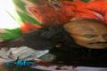 لحظه انفجار منزل علی عبدالله صالح