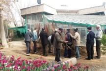 40 هزار اصله درخت در ورامین توزیع شد