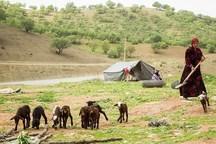 بارندگی، کوچ بهاره عشایر خراسان شمالی را به تاخیر انداخت
