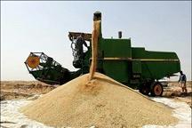 میزان خرید تضمینی گندم از مرز 285 هزار تن گذشت
